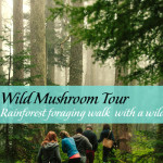 Wild Foraging - BC Rainforest Lunch & Walk