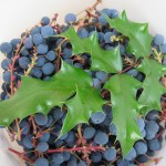Oregon Grape Jelly with ginger
