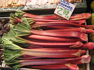 Rhubarb_for_sale_in_Seattle